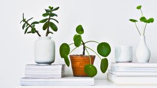 Huonekasvit ovat osa sisustusta